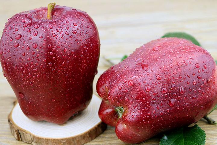 天水花牛苹果什么时候成熟