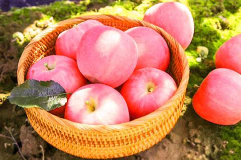 静宁苹果什么时候成熟