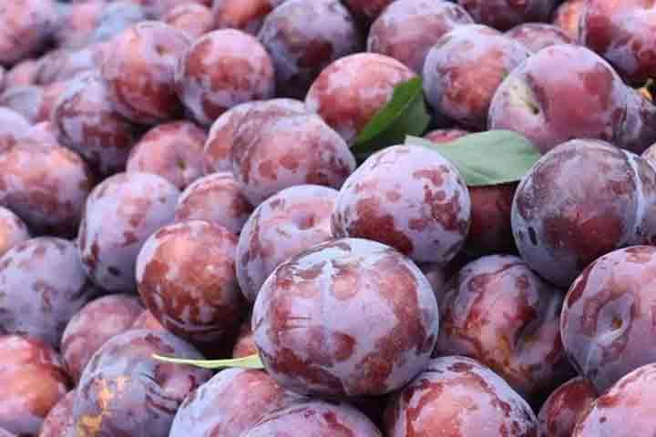 黑布林是什么水果