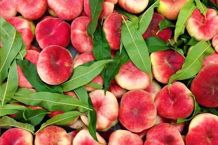 蟠桃是什么桃