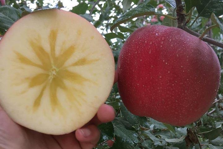 阿克苏苹果好吃吗