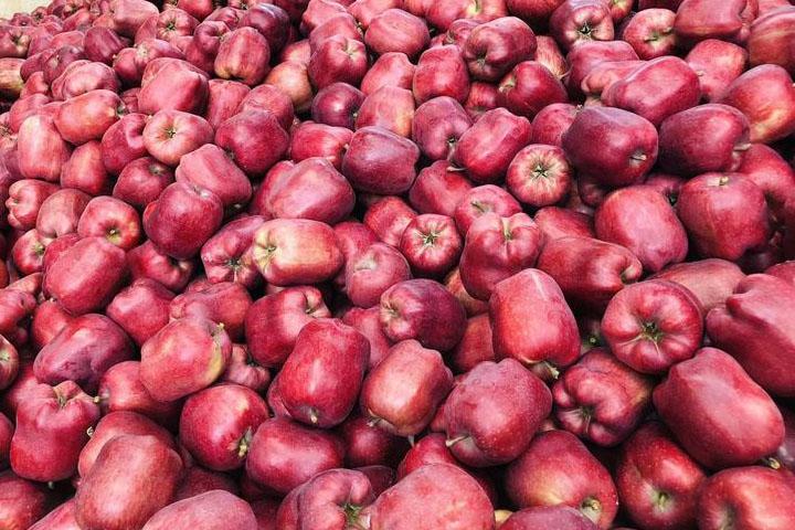 花牛苹果产自哪里
