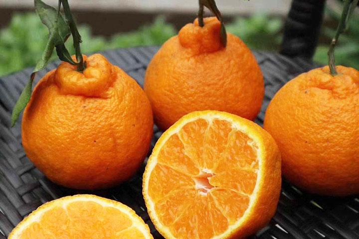 丑橘叫什么
