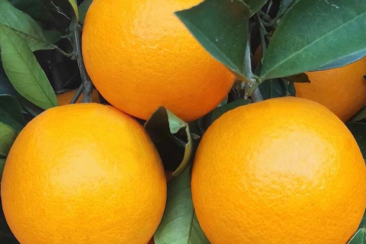 什么水果含维生素c多