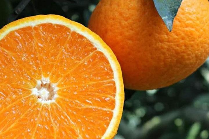 青见是转基因水果吗